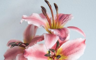 CREATE A LILY FLOWER