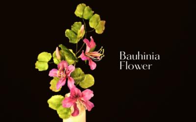 BAUHINIA FLOWER TUTORIAL