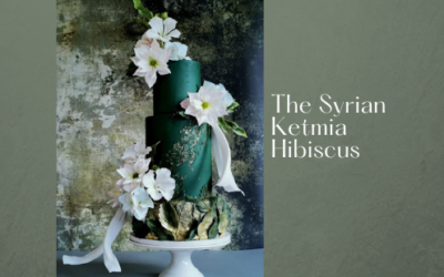 THE SYRIAN KETMIA HIBISCUS FLOWER